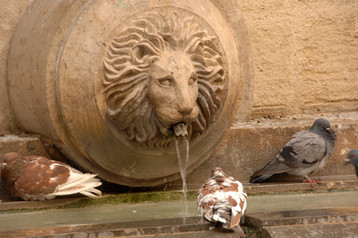 FONTAINE AU LION