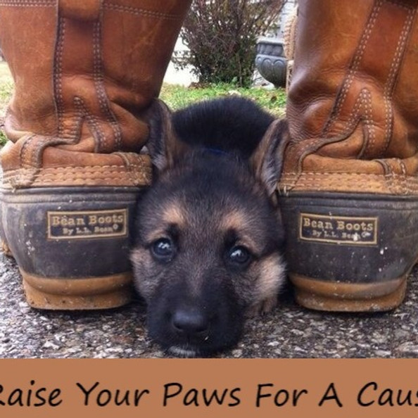 Raise Your Paws For A Cause Shoe Drive Fundraiser