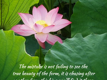 Find the Beauty in the Form