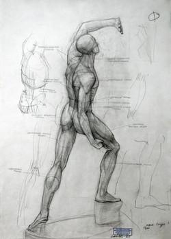 Etudes de l'anatomie humaine