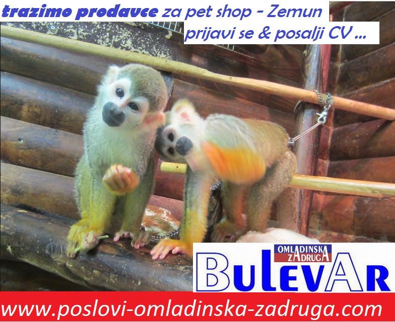Poslovi preko omladinske zadruge, oglasi za posao BULEVAR zadruga - Prodavac u pet shop-u, Novi Beograd