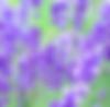 スクリーンショット 2019-05-02 0.19.48.png