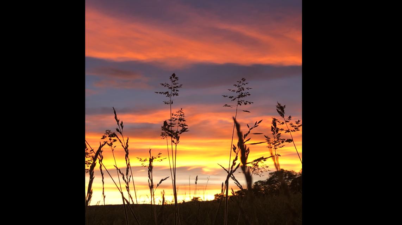 Sunset Grass.PNG