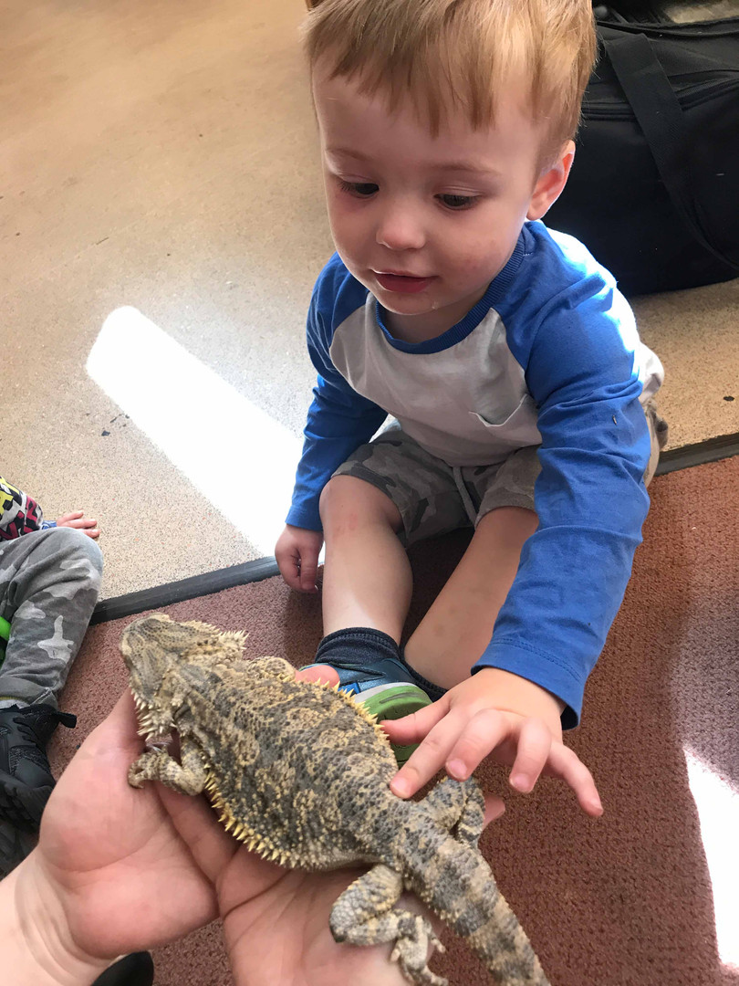 reptiles from Zoolab visitng the nursery
