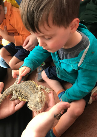 special live visitors from Zoolab at Sutherland Nursery