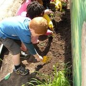 digging and planting together