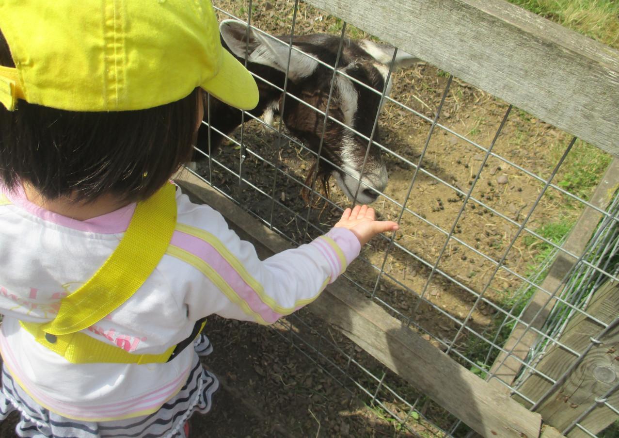 Sutherland Nursery farm trips