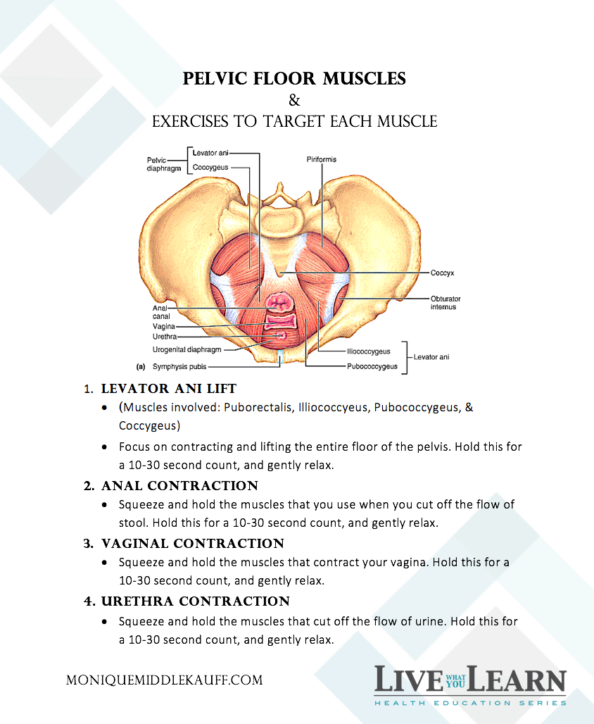 Pelvic Floor Muscles and Exercises