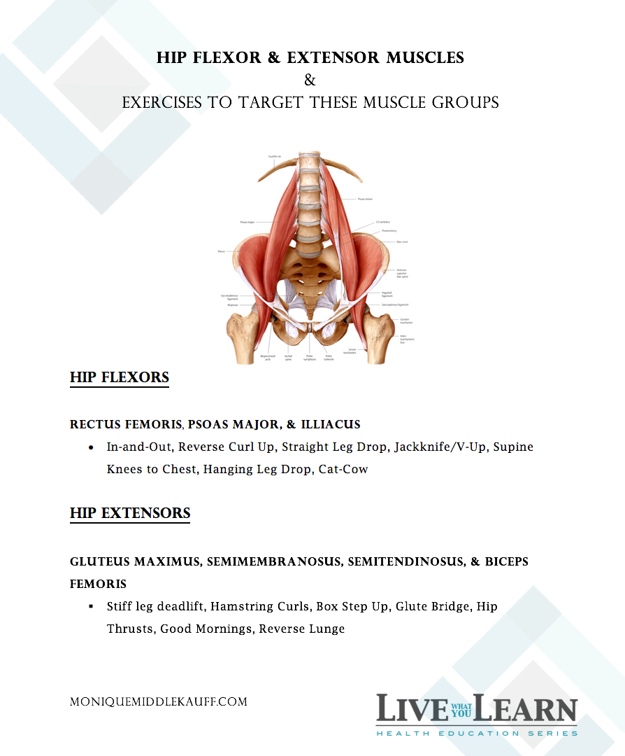 Hip Flexor and Extensor Muscles