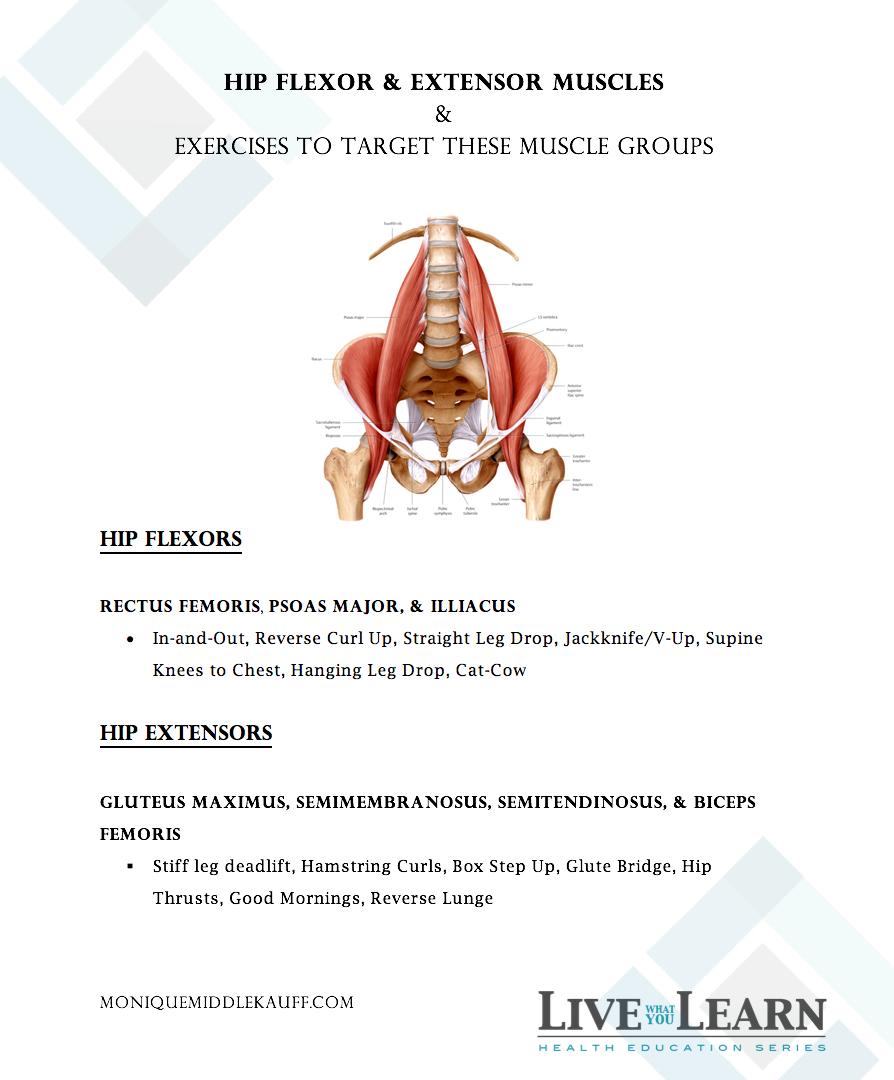 Hip Flexor and Extensor Muscles