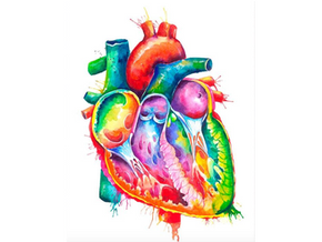 Heart Health: Myths, Misconceptions, and Recommendations
