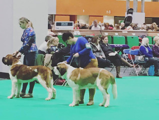 crufts 2018 , rewritten tamed version of my thoughts .....