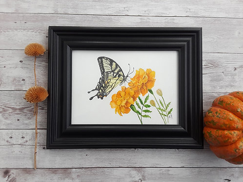 Marigold and Swallowtail Original Art