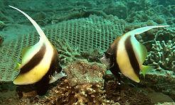 Two fish.jpg