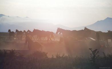 Dagestan herd