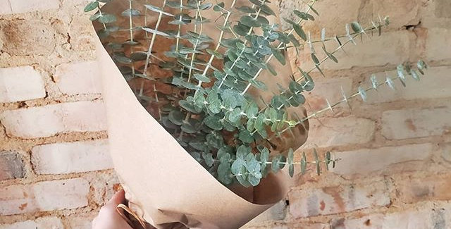 Fresh Bouquet of Eucalyptus