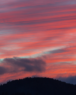 Redwood Sunset