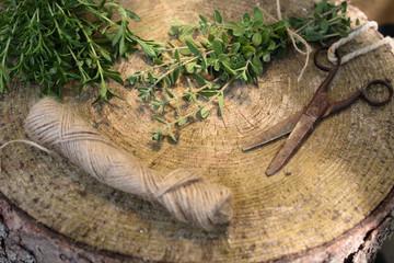 Herbes de Provence : Cueillette/Conservation
