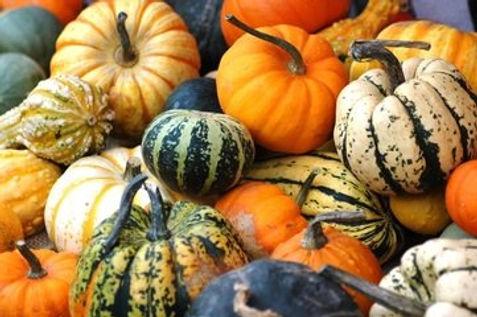 pumkins-squashes-gourds-1-1521296.jpg