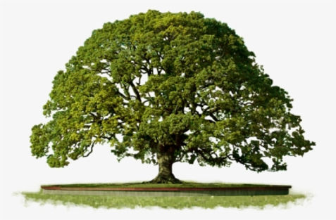 114-1141716_tree-free-png-portable-netwo