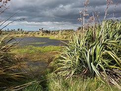 wairio-wetlands.jpg