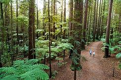 EX14-The-Redwoods-Rotorua-Graeme-Murray.jpeg