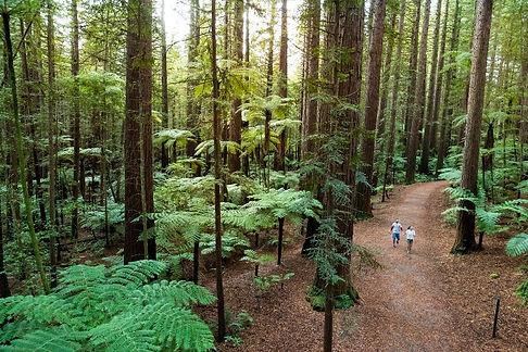 EX14-The-Redwoods-Rotorua-Graeme-Murray.