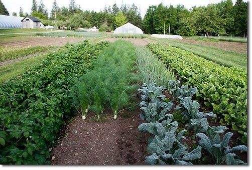organic_market_garden.jpg
