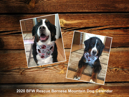 Bernese Mountain Dog Calendars