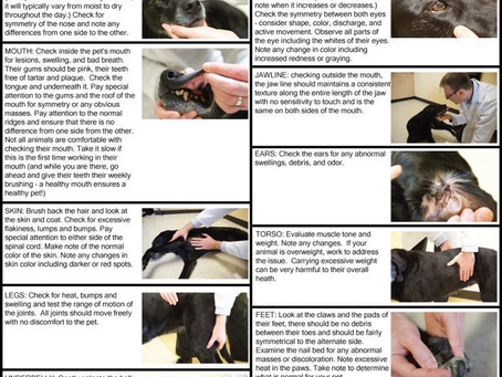 How to check those Berners for possible cancer
