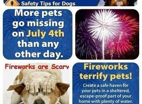 Keep Those Berners Safe During Fireworks