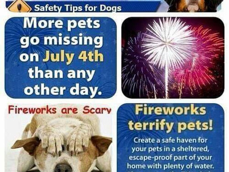 Keep Those Berners Safe During Fireworks