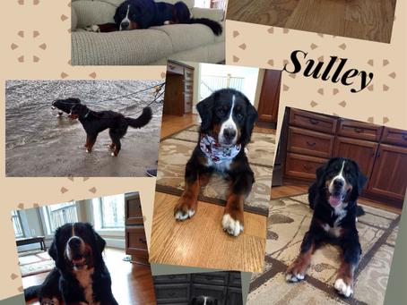 Run Free Sulley