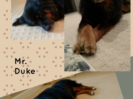 Duke is looking for a forever home to call his own