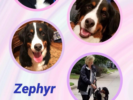 Zephyr is Forever Home