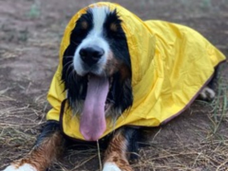 Sully Loving his RainRover