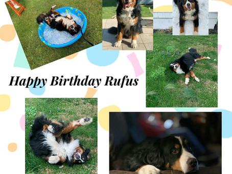 Rufus Turns 9 years old