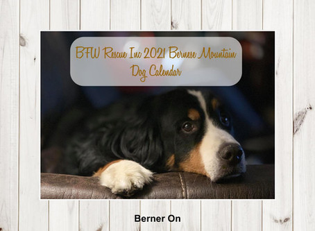 2021 Bernese Mountain Dog Calendars are Here