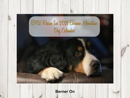 2021 Bernese Mountain Dog Calendars