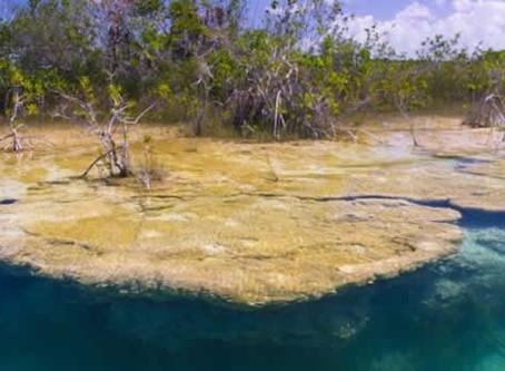 En Bacalar hallarás una de las forma de vida más antigua: los estromatolitos