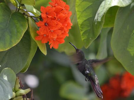 La primavera llega a Bacalar y junto a ella llegan nuevas experiencias.