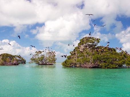 Las moscas en la Costa Maya se han vuelto parte de la atracción.