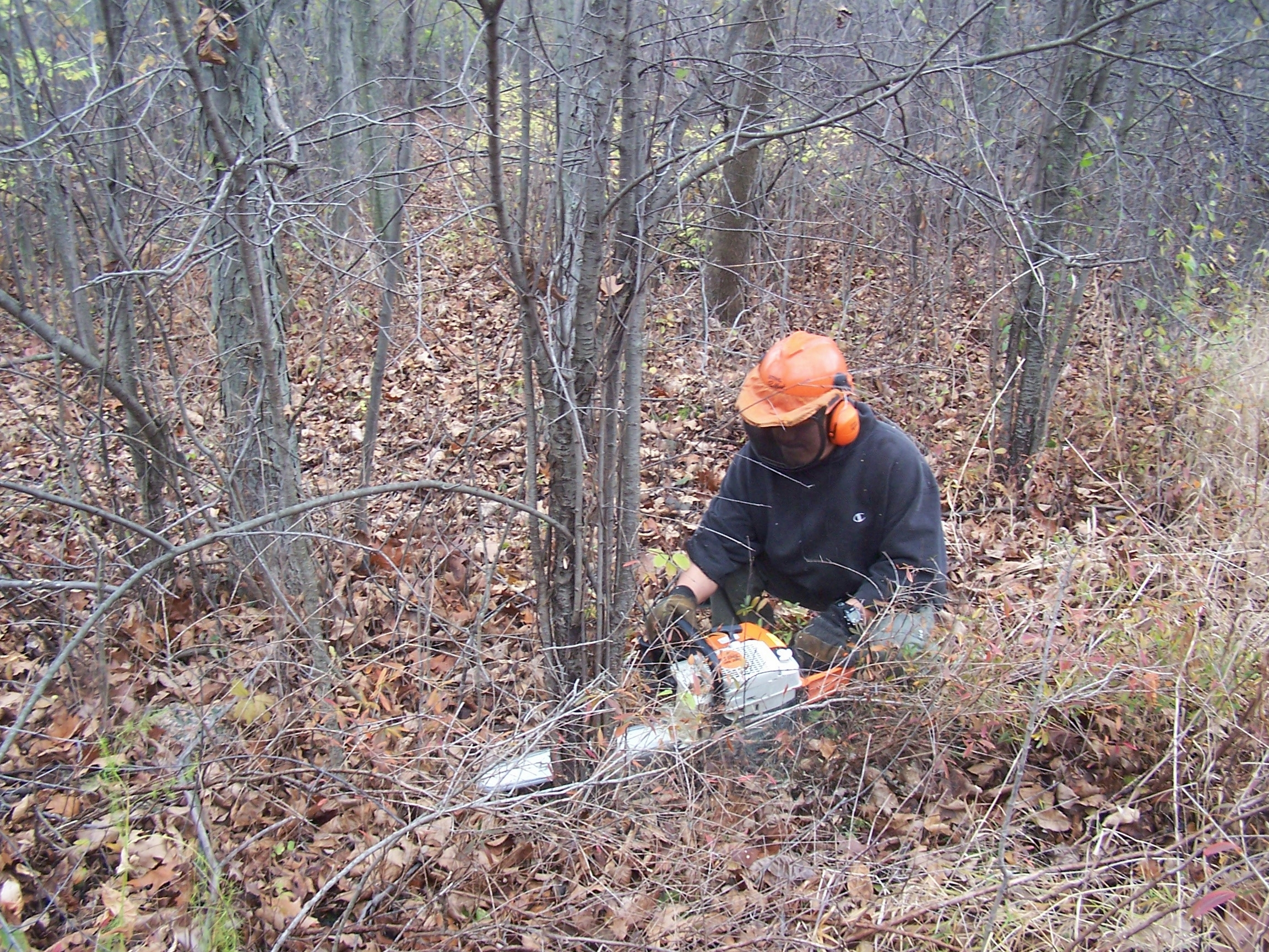 Buckthorn is most invasive plants needing removal.