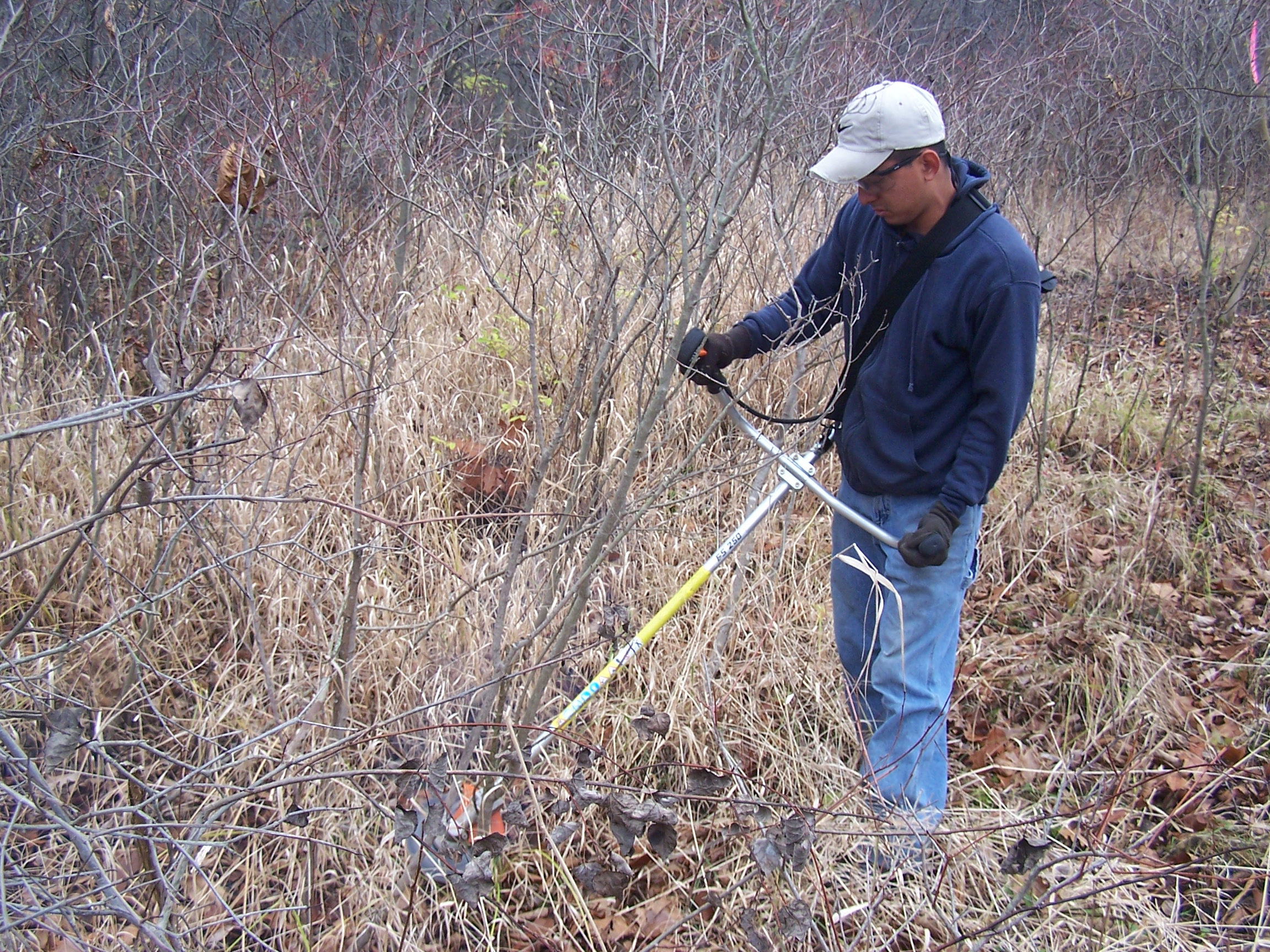 Brush cutter being used to remove gray dogwood.