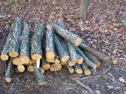 Cherry wood available to members.
