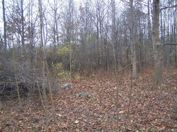 Cleared area (foreground) & uncleared (background).