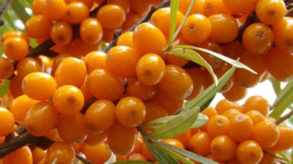 Оранжевая (Средний)