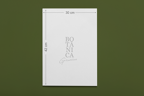 Gravura Botânica - Sempervivum canariense
