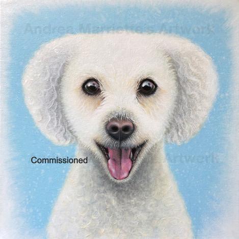 Toby, Pet Portrait