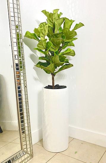Indoor Plant 1